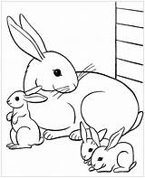 Coloring Rabbit Pages Children Animals sketch template