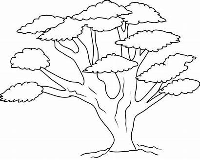 Tree Oak Coloring Clipart Forest Clip Outline