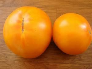 Tomaten Blätter Gelb : persimmon tomate russische fleisch tomaten gelb ~ Frokenaadalensverden.com Haus und Dekorationen