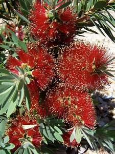 Desert Flowers | Plants and flowering plants | Pinterest