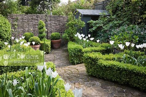 Gap Gardens  Small Buxus Sempervirens  Box Parterre In