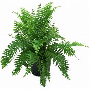 Artificial Plants - Walmart com