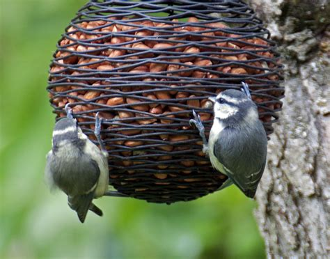 bird food recipes for winter frg ie