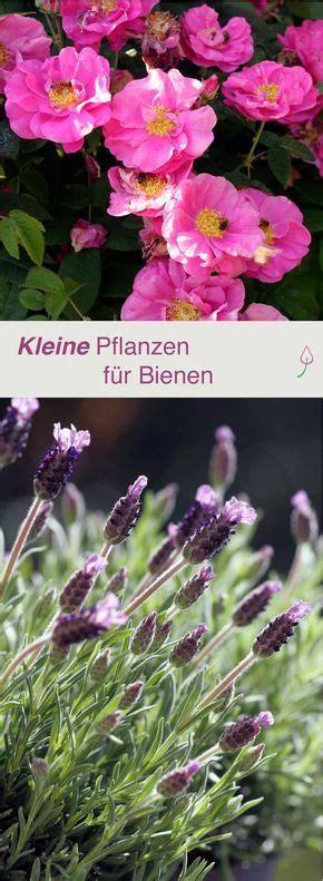 Bienenfreundliche Pflanzen Für Den Kleinen Garten Oder Den