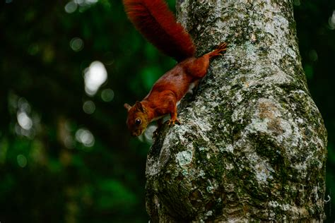Forest Animals Live Wallpaper - free images tree forest branch leaf wildlife green