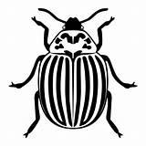 Beetle Potato Vector Illustrations Silhouette Clip sketch template
