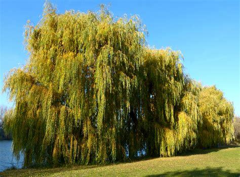 Bäume,Weiden,Natur,