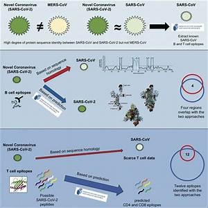Scientists Identify Potential Targets For Immune Responses