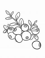 Blueberry Coloring Printable Pages Sheet Pdf Template Blueberries Templates Coloringcafe Drawing Fruits Boyama Vegetables Sketch Paper Button Prints Standard Below sketch template