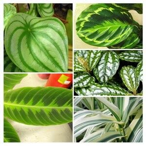 House Plants Guide And Tips Houseplantsexpertcom