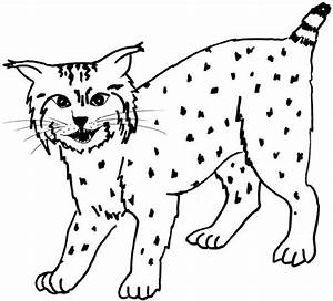 Coloring Pages Of Bobcats Bobcat Coloring Pages 12