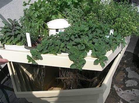 hydroponic herb garden 46 best growing herbs with hydroponics images on