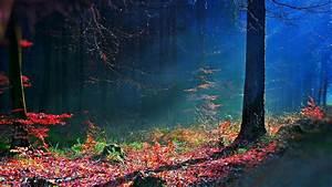 Mystical Forest Wallpaper - WallpaperSafari