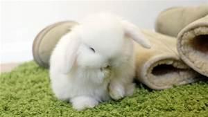 Baby Bunny Grooming - So CUTE! - YouTube