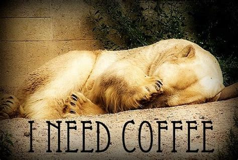 I Need Coffee Polar Bear 2×3 Fridge Magnet Bulletproof Coffee Recipe Weight Loss Butter Hack For Vegan Without Cream Side Effects Ratio