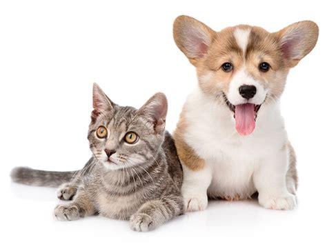 home healthy pets usa