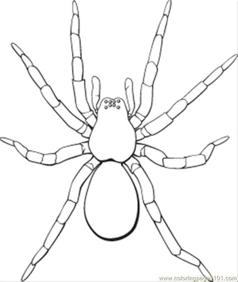 spider coloring pages spider coloring pages to and print for free