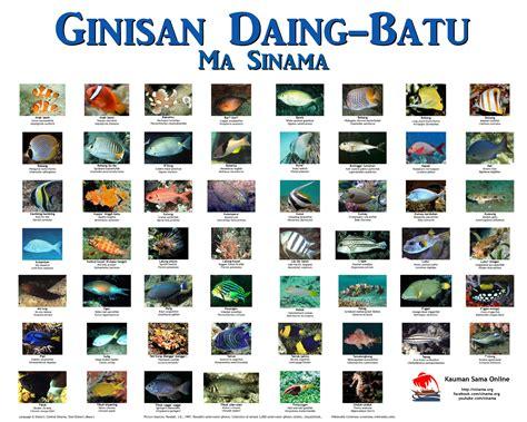 common reef fish sinama english scientific  poster