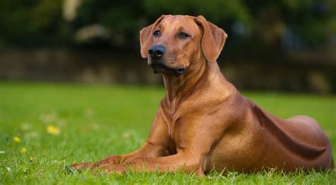 beautiful dog breeds   world