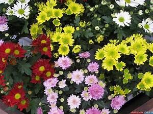 Blumen Im November :  ~ Lizthompson.info Haus und Dekorationen