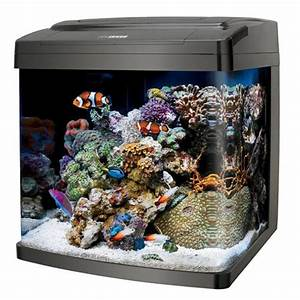 17 Best Images About Super Cool Fish Tanks On Pinterest