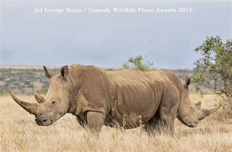 Wildlife Photography Awards Comedy