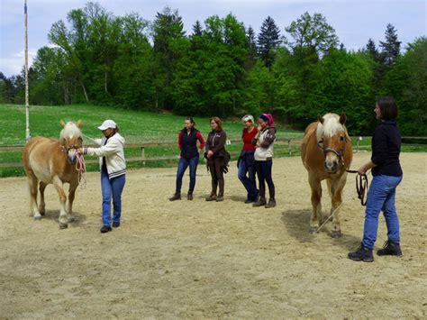 Tellington Touch Pferd
