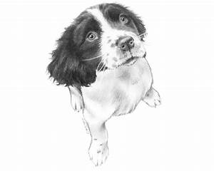 Tips For Drawing Realistic Pet Portraits