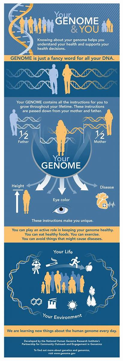 Genome Infographic Human Gov Health Understand Research