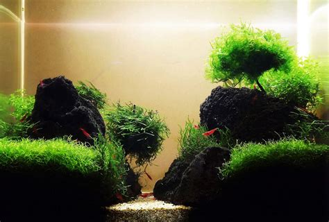 Tropical Aquascape by Top 10 Most Beautiful Freshwater Aquariums Of 2012