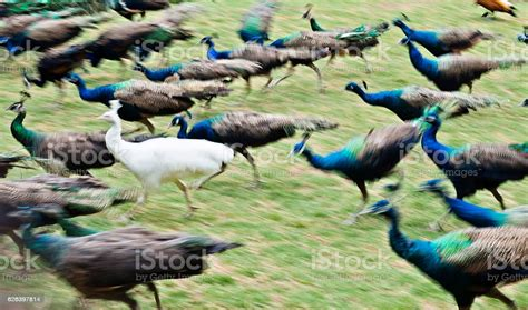 Be Different Stock Photo - Download Image Now - iStock