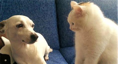 amazonia si鑒e social condividere foto di cani e gatti sui social quali rischi si corrono petpassion