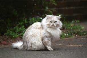 a cat in a cat