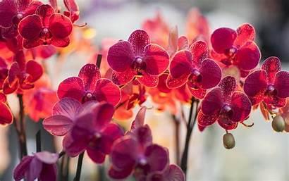 Orchid Flower Greetings Editable