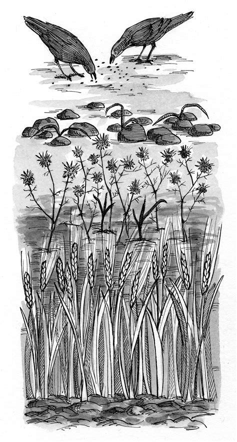 luke   illustration seed falls   soil