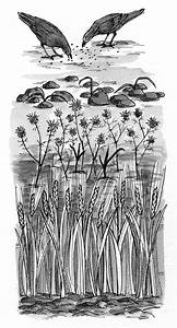 luke 8 4 8 illustration seed falls on different soil