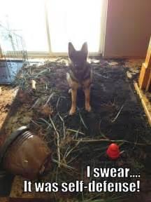 Bad German Shepherd Dog