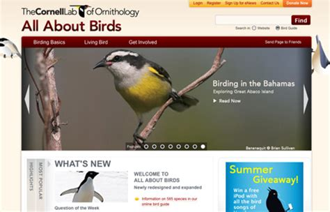 allaboutbirds org unmatched style