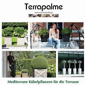 Kuebelpflanzen Fuer Terrasse : mediterrane k belpflanzen f r die terrasse terrapalme heim und gartenshop ~ Orissabook.com Haus und Dekorationen