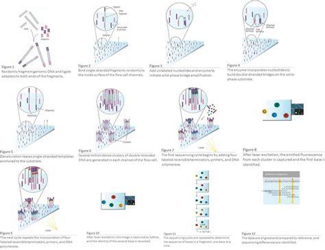 Illumina Sequencing Protocol by 5 The Illumina Sequencing Protocol Source Illumina 71