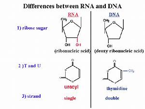 What Is The Structure Of Rna