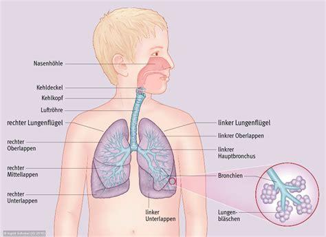 anatomie latein