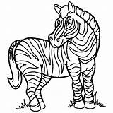Zebra Coloring Zebras Stripes Drawing Without Printable Clipart Template Colored Sketch Drawings sketch template