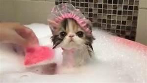 Laver Un Chaton : ce chaton adore prendre son bain ~ Nature-et-papiers.com Idées de Décoration