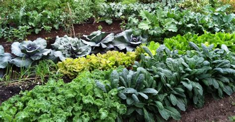 best compost for vegetable garden 7 best ways to make your own compost to grow