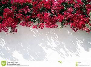 Mur De Fleurs : mur espagnol avec des fleurs images libres de droits image 293359 ~ Farleysfitness.com Idées de Décoration