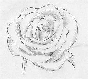 rose | Rose drawings and Tattos