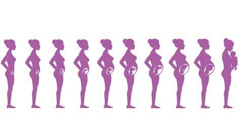 3 monat schwanger schwangerschaft 3 monat