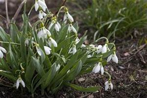 Welche Blumen Blühen Im März Blumen Im M Rz Pflanzen Die