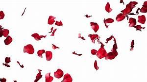 Rose Petals Falling Png | www.pixshark.com - Images ...